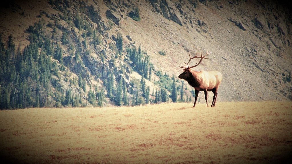 High Country Elk, Rest Day